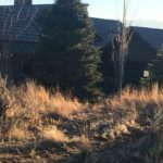 Park City Utah Landscaping Pine Tree Planting