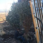Park City Utah Landscaping Tree Planting